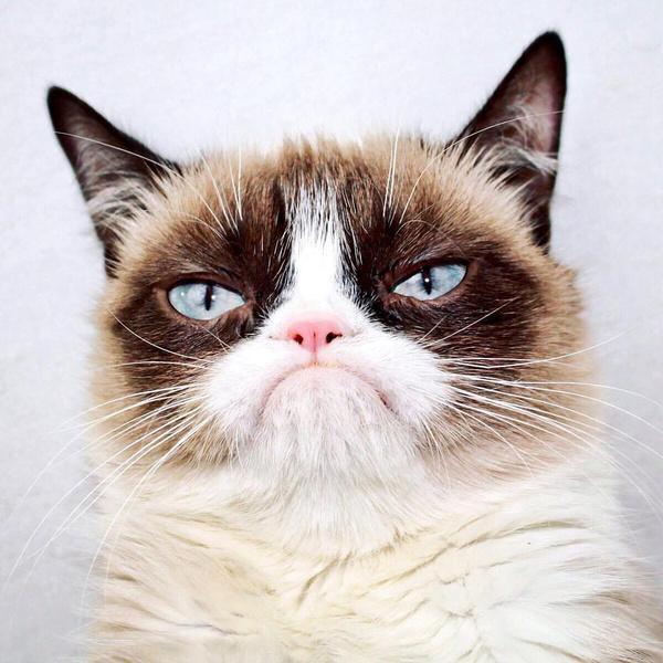 Фото №2 - Короли драмы: 25 невероятно артистичных котиков