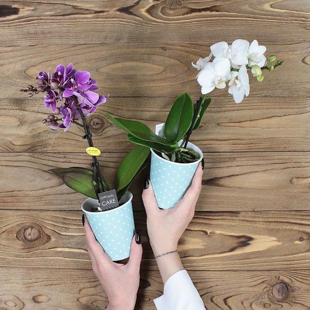 Фото №2 - Весенний флорариум с орхидеей: советы по изготовлению и уходу
