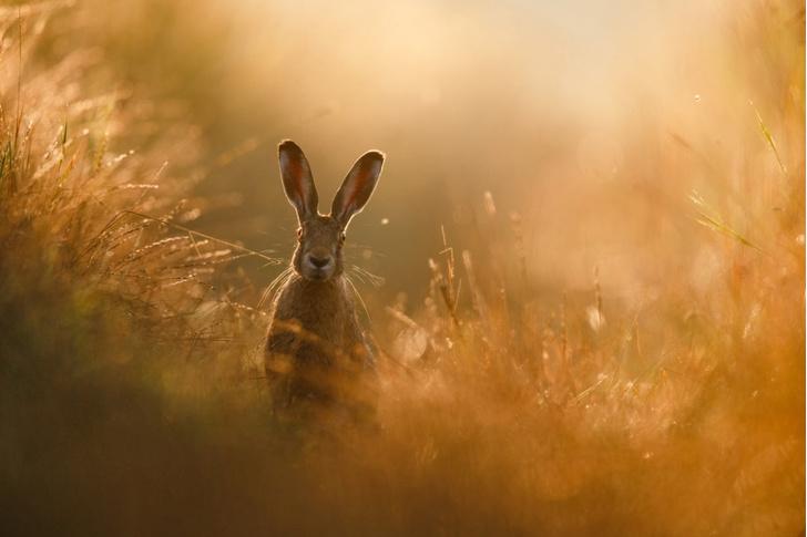 Фото №1 - Заяц в мечтах