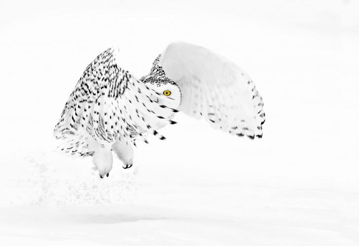 Фото №1 - Белое на белом