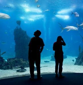 Фото №1 - В Москве появится огромный океанариум