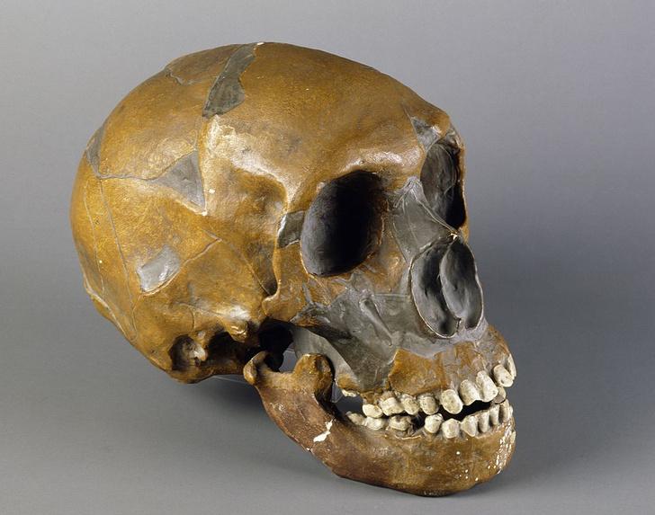 Фото №1 - Стоматология появилась в каменном веке