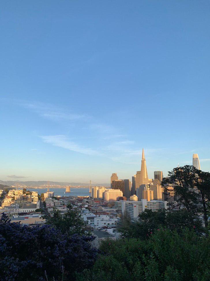 Фото №2 - Всё, что вы не знали о: серфинг в школе, собаки вместо детей и еще 12 фактов о жизни в Сан-Франциско