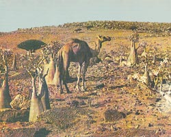 Фото №4 - Бедуины живут в горах