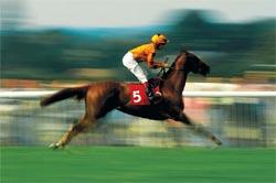 East NewsАллюром называют различные виды движения лошади. Он бывает двух типов — естественный и искусственный. Естественный аллюр подразделяют на шаг, рысь, галоп, карьер и иноходь.