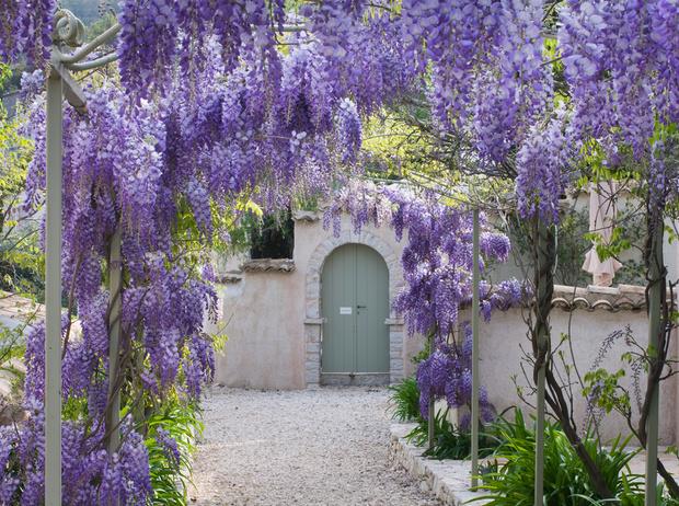Фото №8 - 5 лучших растений для вертикального озеленения садового участка