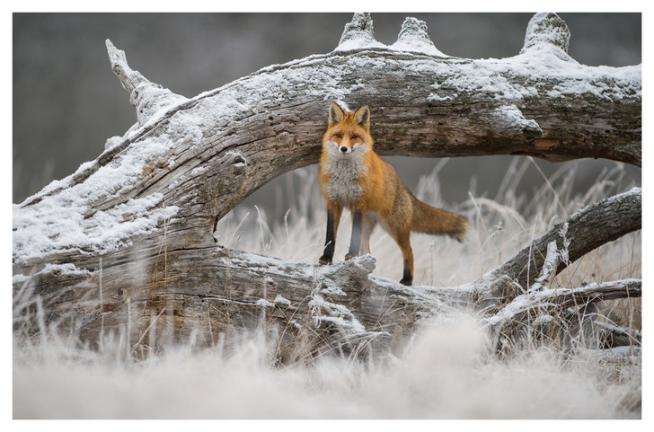Фото №4 - Лесные истории
