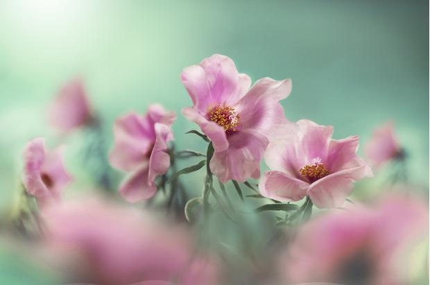Фото №4 - Узнай, какой ты цветочек по дате рождения