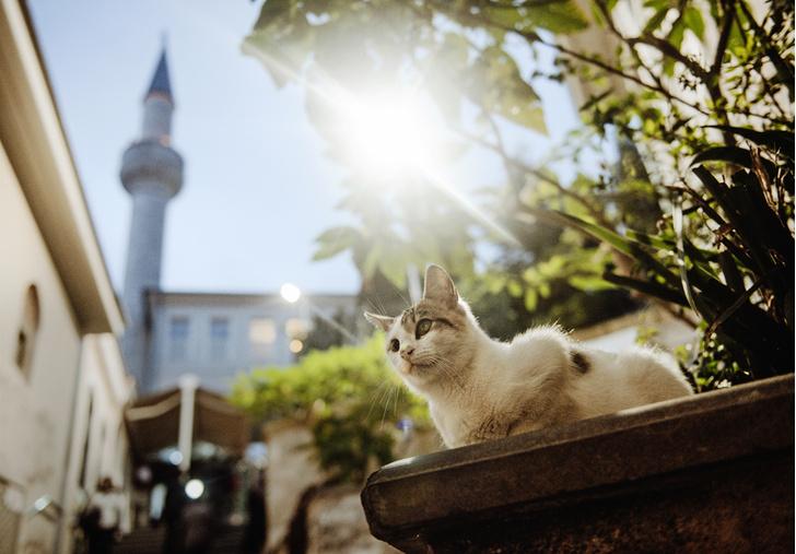 Фото №1 - Короли улиц: настоящие хозяева Стамбула