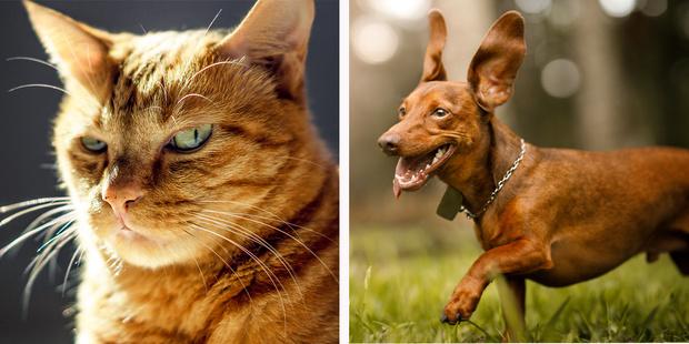 Фото №2 - Собачники vs кошатники: ученые установили, чем отличаются их характеры (не очень приятные новости для владельцев кошек)