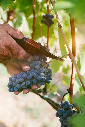 Фото №7 - Вино с приставкой «bio»: кто ввел тренд на биодинамические вина и где их искать