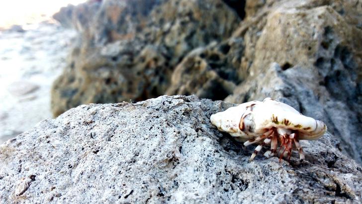 Фото №5 - Жадность Науру: остров, который погубила алчность