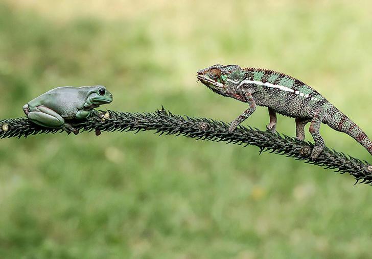 Фото №1 - Встреча двух охотников