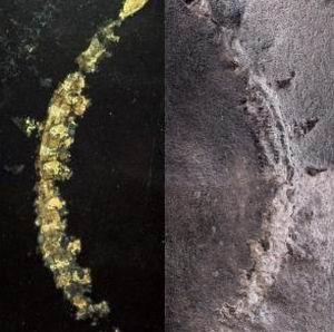 Фото №1 - В Канаде нашли окаменелую экосистему