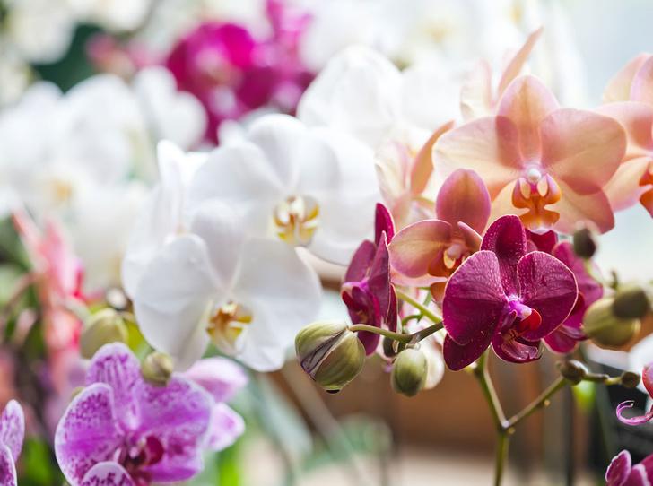 Фото №1 - Мифический цветок: все, что нужно знать об орхидеях