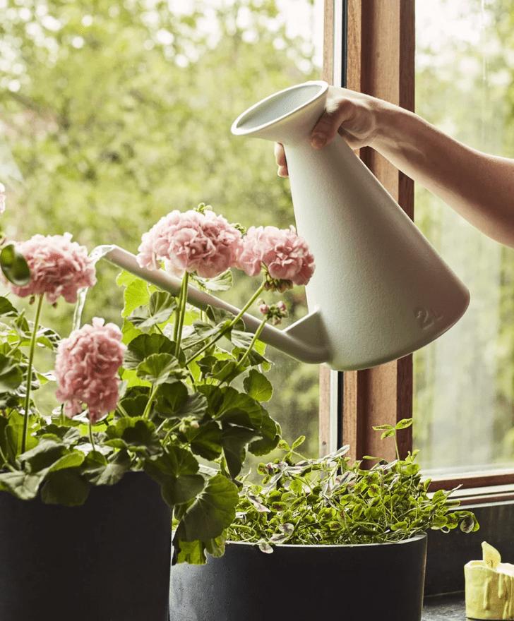 Фото №5 - Как правильно поливать комнатные растения: 5 советов