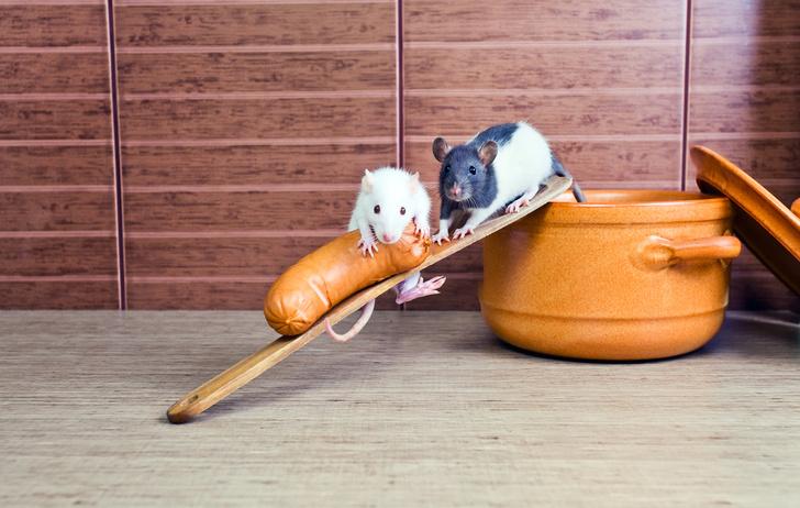 Фото №1 - Ученые «отредактировали» воспоминания спящих мышей