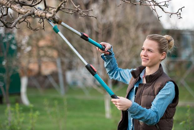 обрезка плодовых деревьев как правильно