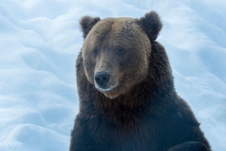 Фото №2 - По лесу идет: 5 интересных фактов о медведях на примере мультсериала «Маша и Медведь»
