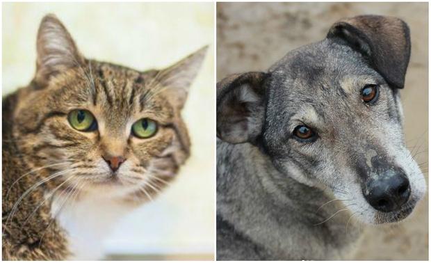 Фото №1 - Котопёс недели: кошка Леся и пёс Майло