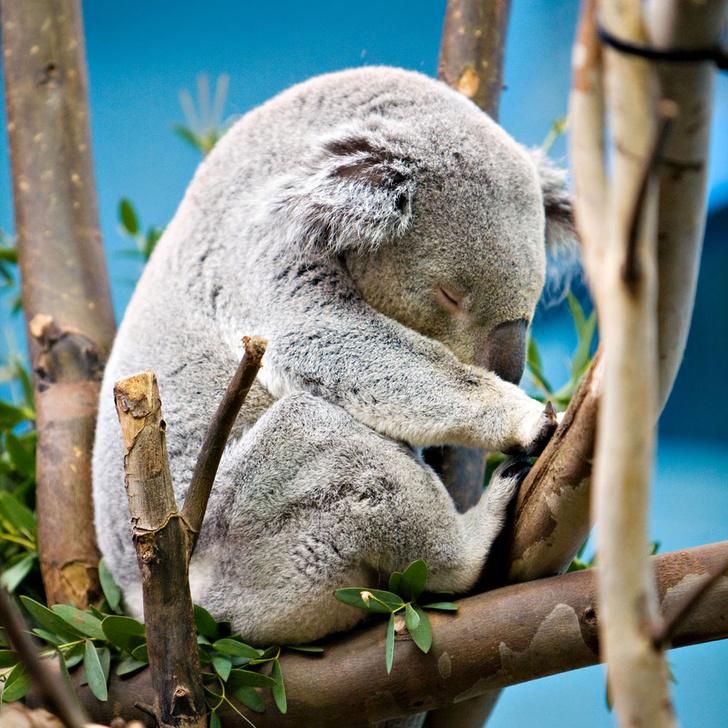 Фото №2 - Детки вне клетки: 12 лучших зоопарков мира