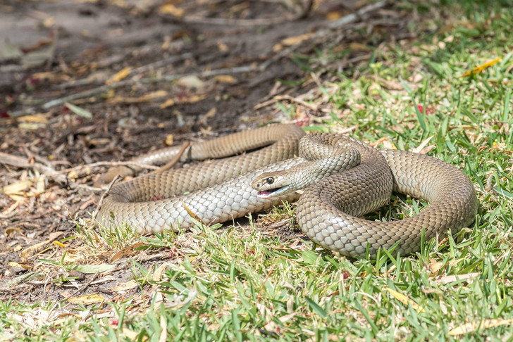 Фото №1 - Развеян один из мифов об Австралии