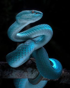 Фото №2 - К чему снятся змеи: что говорят сонники и психологи