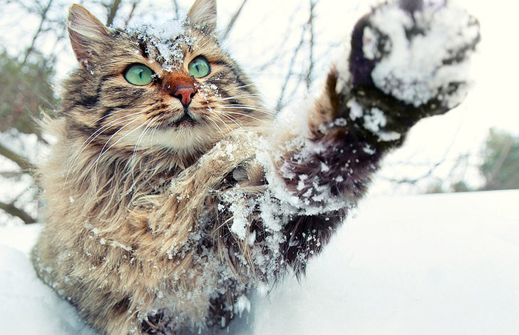Фото №5 - Как кошки захватили мир