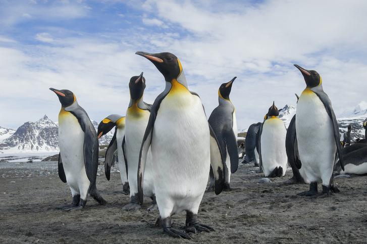 Фото №6 - Повелители Антарктики и не только: 7 мест на планете, где можно встретить пингвинов