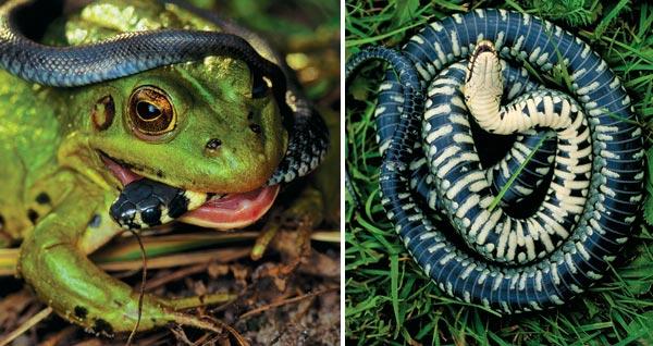 Фото №2 - Самый добрый змей