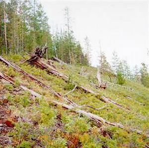 Фото №1 - Ударный кратер Тунгусского метеорита мог стать озером
