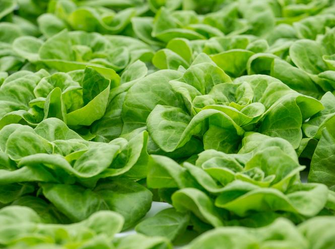 Фото №6 - 10 видов зеленого салата и 6 потрясающе простых рецептов с ним