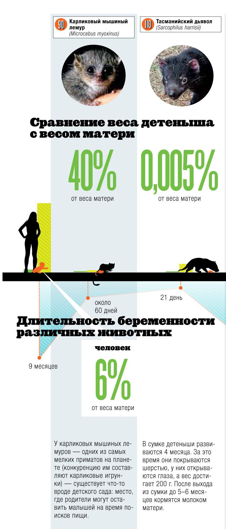 Фото №1 - Инфографика: детский сад