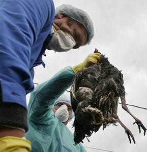 Фото №1 - Вирус птичьего гриппа мутировал в человеческий