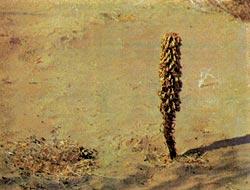 Фото №6 - Солнечный ветер