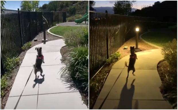 Фото №1 - Собака приходит в восторг каждый раз, когда видит парк для прогулок (видео)