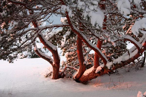 Фото №2 - К Новому году сама природа замирает