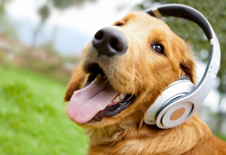 Фото №1 - Ученые выяснили отношение собак к музыке