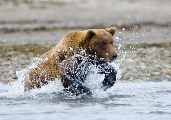 Фото №3 - По лесу идет: 5 интересных фактов о медведях на примере мультсериала «Маша и Медведь»