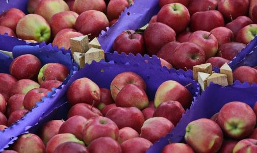 Фото №1 - Специалисты рассказали, как выбрать качественные яблоки