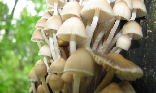 Фото №1 - Осторожно: грибной сезон