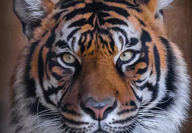 Фото №1 - Фотограф часами выжидал животных ради серии снимков, на которых они смотрят тебе прямо в глаза