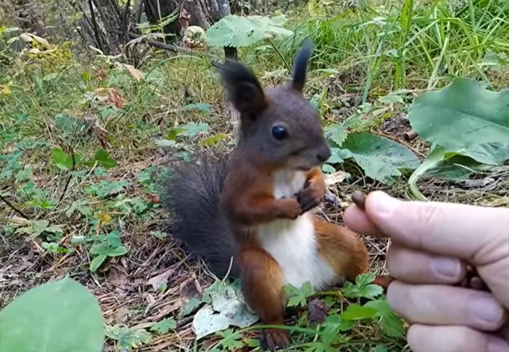 Фото №1 - Белке протянули целую горсть орешков, и она от этого «сломалась» (видео)