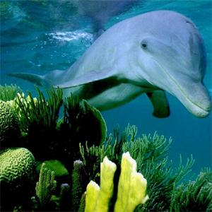 Фото №1 - Дельфины и киты вдохновляют ученых
