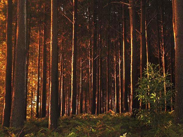 Фото №2 - Тайны абсолютно черного леса