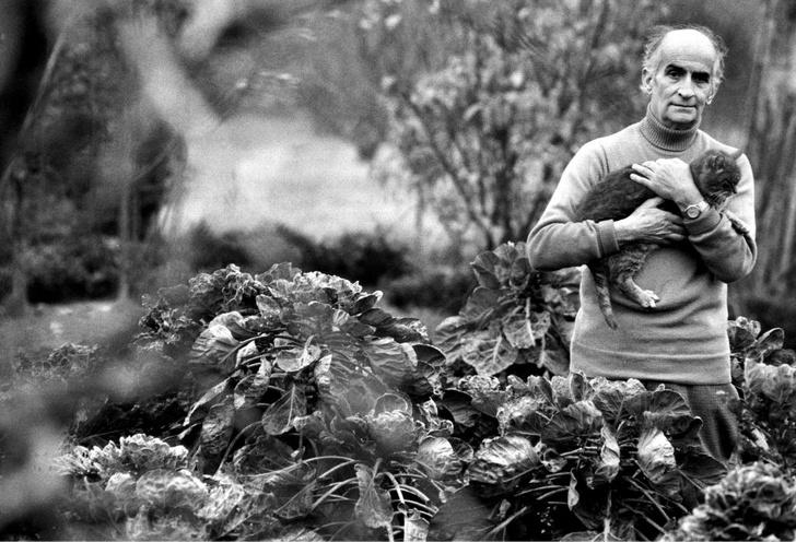 Фото №6 - Самый смешной актер Франции: 7 фактов о Луи де Фюнесе