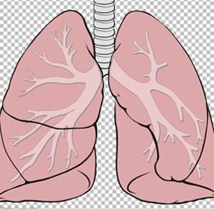 Фото №1 - В мире растет число заболеваний легких