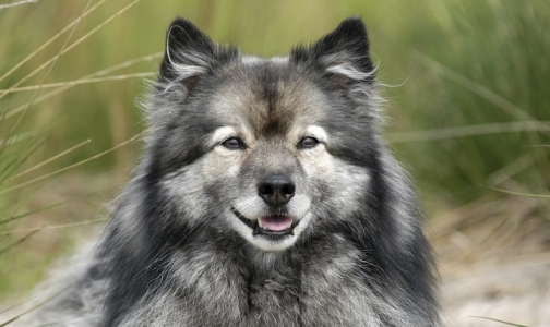 Фото №1 - Собаки не реагируют на запах испуганного человека