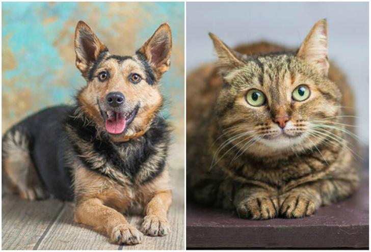 Фото №1 - Котопёс недели: возьми из приюта собаку Есению или кошку Долли