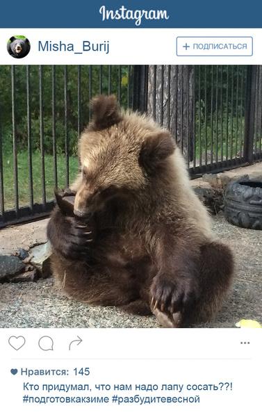 Фото №4 - Если бы у зверей был «Инстаграм»: 20 блогеров из зоопарка